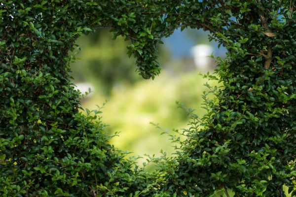 Picture showing a heart shape cut out of a hedge